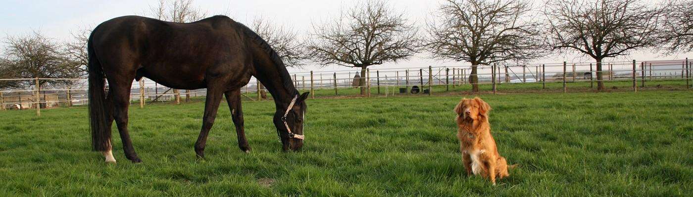 horsebec – Praxis für Tierosteopathie und Naturheilkunde